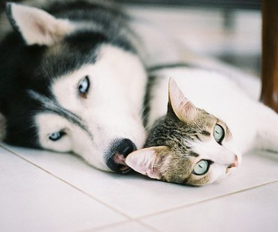 Cats and Dogs: Can we be friends?