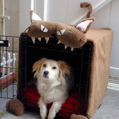 The power of crate training