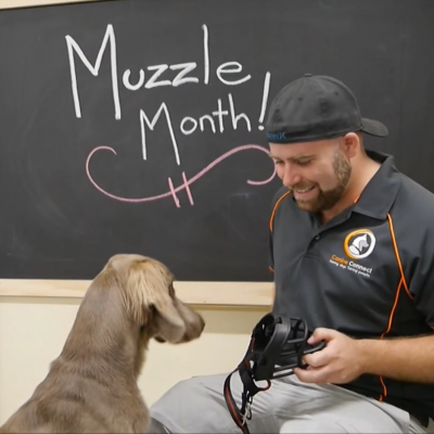 A beginners guide to muzzle training