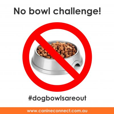 Dog bowls are out!