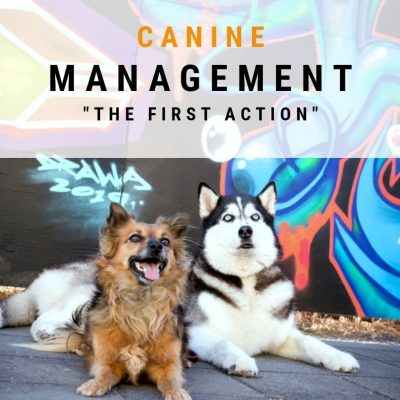 Managing Canine Behaviour