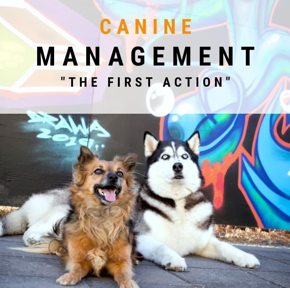Managing Canine Behaviour